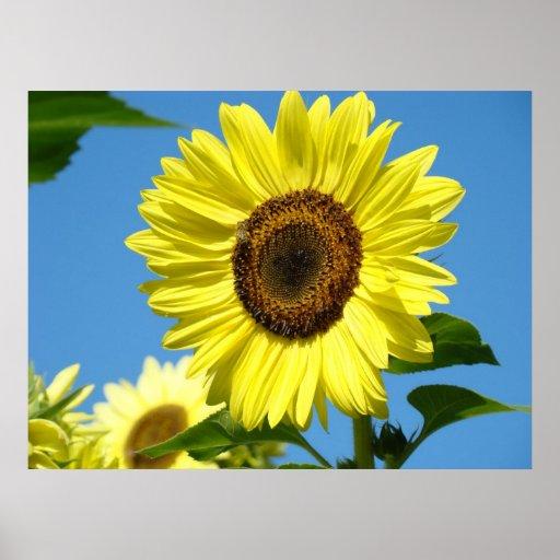Wall Art Sunflowers Art Prints Blue Sky Canvas Poster