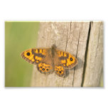 Wall Brown Butterfly Photo Print