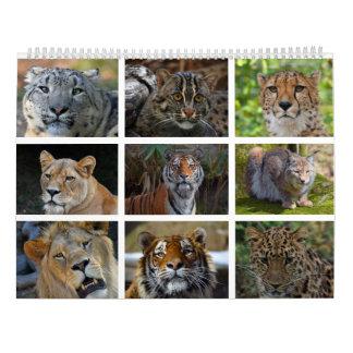Wall calendar with photos of wild cats
