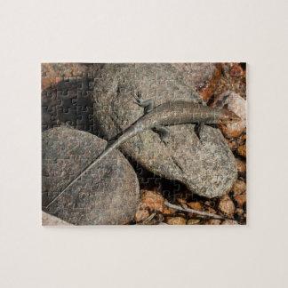 Wall Lizard.  Endemic to Socotra, Yemen. Jigsaw Puzzle