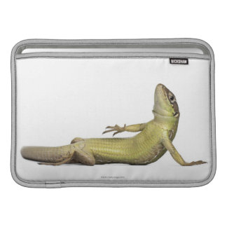 Wall lizard lying down - Podarcis muralis Sleeve For MacBook Air