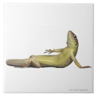 Wall lizard lying down - Podarcis muralis Tile