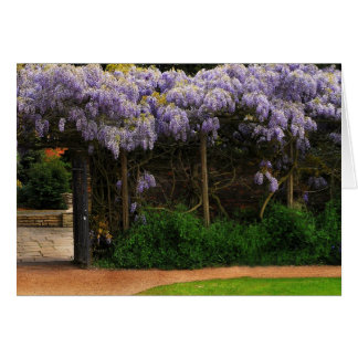 Wall of Wisteria Card