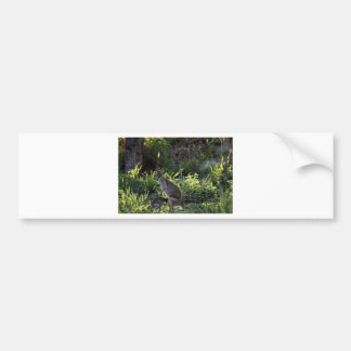 WALLABY AND JOEY GETTING IN POUCH AUSTRALIA BUMPER STICKER