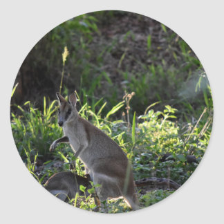 WALLABY AND JOEY GETTING IN POUCH AUSTRALIA ROUND STICKER