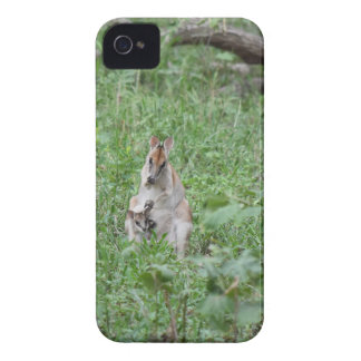 WALLABY AND JOEY RURAL QUEENSLAND AUSTRALIA iPhone 4 CASE