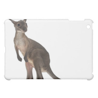 Wallaby - Macropus robustus (3 months old) iPad Mini Cases