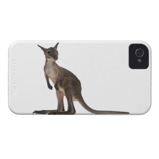 Wallaby - Macropus robustus (3 months old) iPhone 4 Case-Mate Case