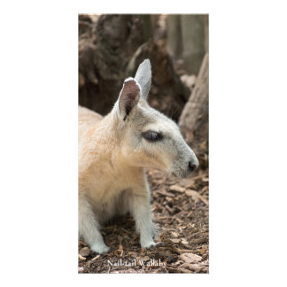 Wallaby Profile Personalized Photo Card