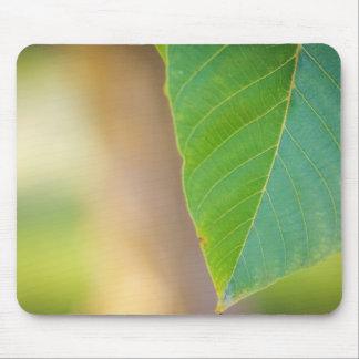 Walnut leaf mouse mat