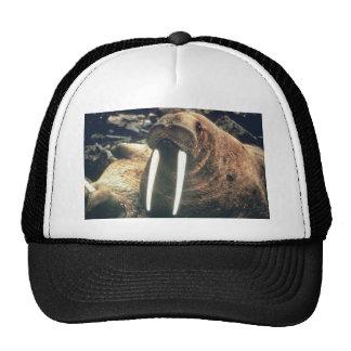 Walrus Cap