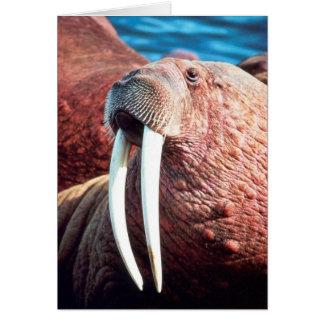 Walrus Card