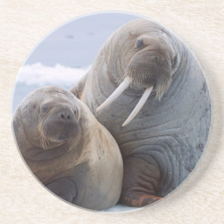 Walrus cow and calf rest on a sea ice floe coaster