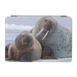 Walrus cow and calf rest on a sea ice floe iPad mini cover