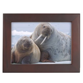 Walrus cow and calf rest on a sea ice floe keepsake box