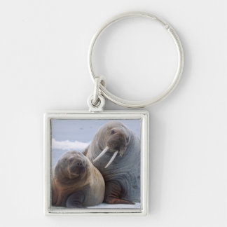 Walrus cow and calf rest on a sea ice floe key ring