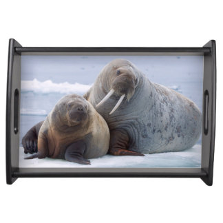 Walrus cow and calf rest on a sea ice floe serving tray