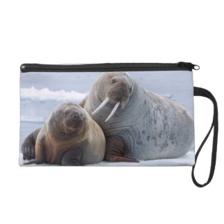 Walrus cow and calf rest on a sea ice floe wristlet purse