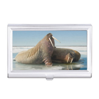 Walrus group rests on sea ice under a sunny sky business card holder