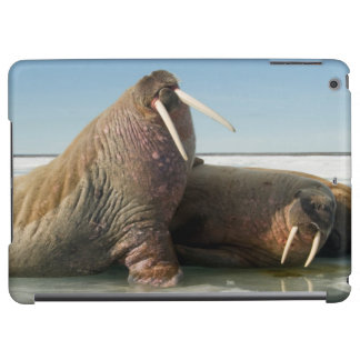 Walrus group rests on sea ice under a sunny sky iPad air cover