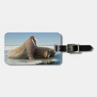 Walrus group rests on sea ice under a sunny sky luggage tag