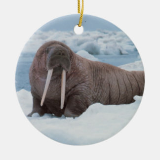 Walrus laying around christmas ornament
