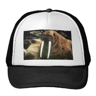 Walrus Male Mesh Hat