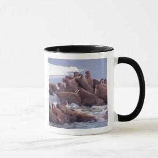 walrus, Odobenus rosmarus, on the pack ice of Mug