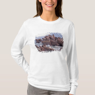 walrus, Odobenus rosmarus, on the pack ice of T-Shirt