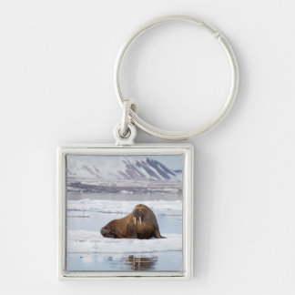Walrus on a Piece of Ice Flow Key Ring