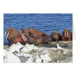Walrus on Bering Sea Ice Card