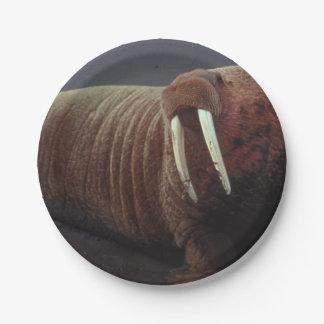 Walrus Paper Plate
