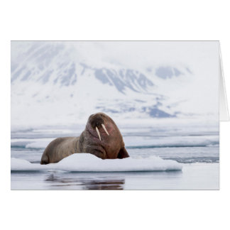 Walrus resting on Ice Flows Card