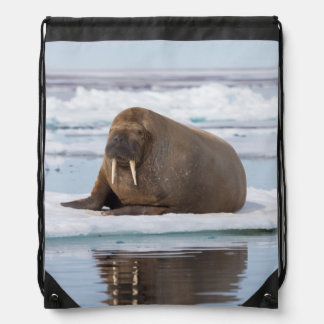 Walrus resting on ice, Norway Drawstring Bag