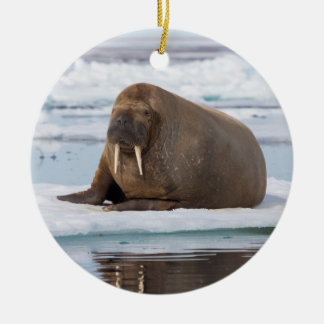 Walrus resting on ice, Norway Round Ceramic Decoration