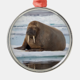 Walrus resting on ice, Norway Silver-Colored Round Decoration
