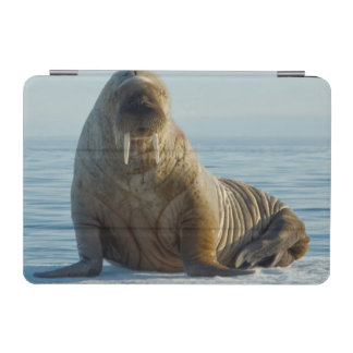 Walrus rests on summer sea ice iPad mini cover