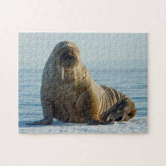 Walrus rests on summer sea ice jigsaw puzzle