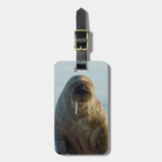 Walrus rests on summer sea ice luggage tag