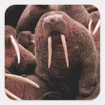 Walrus Square Sticker