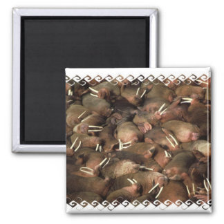 Walruses Square Magnet