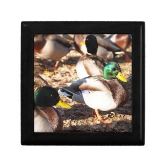 Wandering Ducks - Gift Box