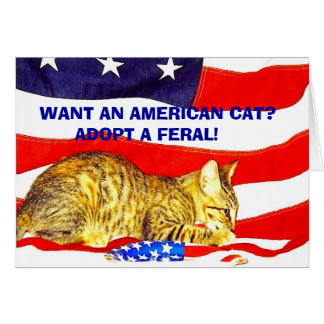 Want an American Cat?  Adopt a Feral! Greeting Card