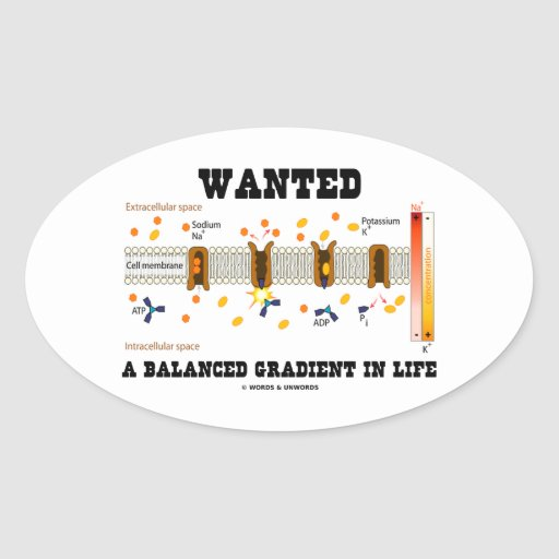 Wanted A Balanced Gradient In Life (Na-K Pump) Oval Stickers