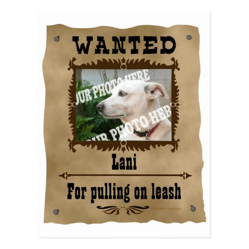 Wanted Wild West Poster Pet Custom Photo Template Post Card