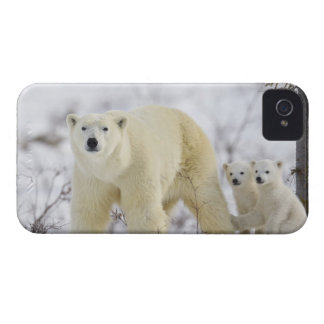 Wapusk National Park, Canada. iPhone 4 Covers