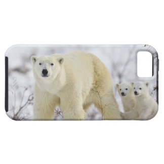 Wapusk National Park, Canada. Tough iPhone 5 Case