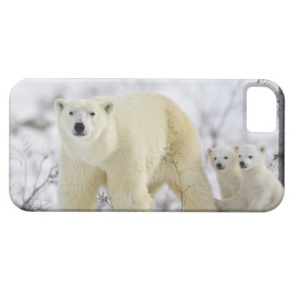 Wapusk Nationalpark, Kanada Case For The iPhone 5