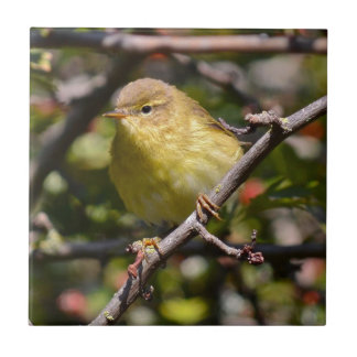 Warbler Tile/Trivet Small Square Tile