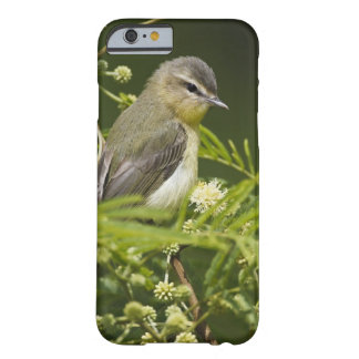 Warbling Vireo (Vireo gilvus) foraging on South Barely There iPhone 6 Case